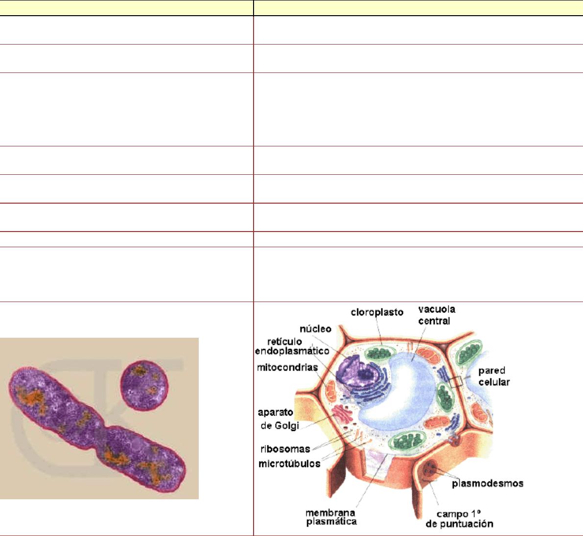 Resumen Ciclo Celular Histología Y Embriología